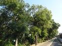Dufkovo nábřeží, pravý břeh Svratky, Horní Heršpice.