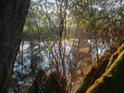 Ranní romance na mechem obrostlých vrbových kmenech u řeky Svratky.