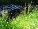 Prosluněný travnatý břeh Svratky, která stínem dává vyniknout své slatinné barvě.