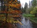 Ještě neopadaný buk s podzimní barvou listů na levém břehu Svratky pod Spělkovskou lávkou.