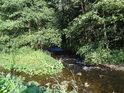 Vody Svratky se sbíhají pod přirozeným ostrůvkem ve Svratce u Borače.