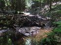 Koryto nejhornější Svratky v lesním úseku.