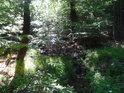 Svratka si razí cestu lesem, zatím je to jen drobný potůček a tak je v rozhraní slunečního svitu a lesního stínu poněkud nenápadná.