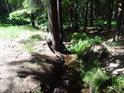 Svratka těsně za hranou lesa.