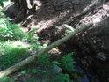 Klacek jako most přes Svratku, vhodný pro poutníky velikosti mravenců.