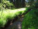 Prosluněný pás na pravém břehu Svratky kontrastuje s temným lesem.