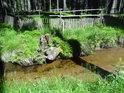 Svratka u lesní ohrady nedaleko osady Mariánská Huť.
