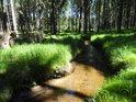 Svratka v lesním úseku se střídáním svitu a stínu.
