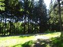 Křižování cest v lesích nad pramenem Svratky.