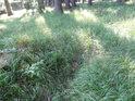 První náznak rýhy v lesní trávě, zde někde už se tvoří první občasné koryto Svratky.