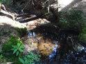 Pramen řeky Svratky