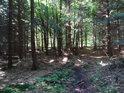 Vlhká lesní pěšina v prameništi Svratky.