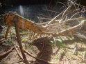 Sluneční lesní scenérie s kusem ulomeného smrkového kmene.