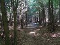 Lesní cestička v lese podél nejhornějšího toku Svratky.