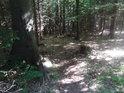 Kontrast světla a stínu je v lese silný.