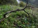 Ulomená větev vysoko nad hladinou Brněnské přehrady v chráněném území Na skalách.