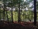 Probleskující hladina Brněnské přehrady přes stromy na chráněném úpzemí chráněném území Na skalách.