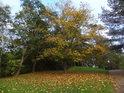 Podzim v kempu.
