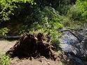 Vyvrácený strom zcela přehradil Svratku.
