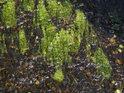 Vodní tráva v slatinné barvě Svratky.